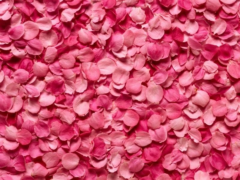 Открытки лепестками роз
